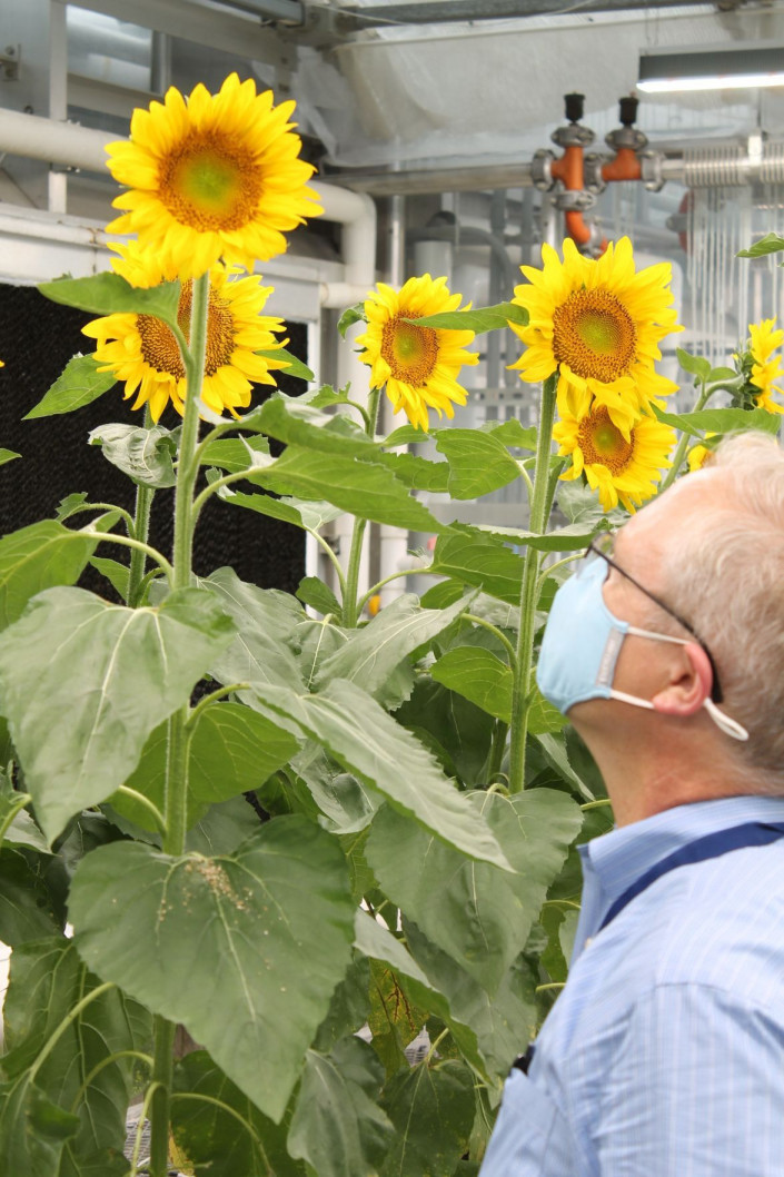 Edison Agrosciences CEO David Woodburn with sunflower